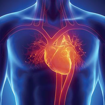 heart scan for heart disease in Lakeland, FL at RIS
